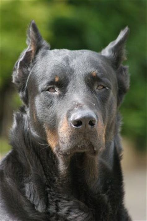 home remedies for spots on dogs dogs home and home remedies on