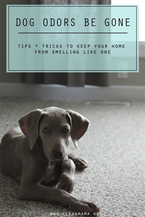 how to keep your house from smelling like a dog how to keep house smelling fresh with dogs 28 images how to keep your home