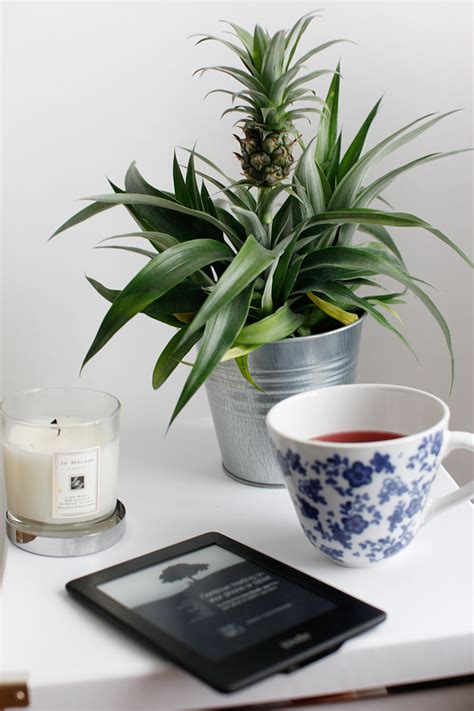 ananas pflanze ikea for the home leseecke berries
