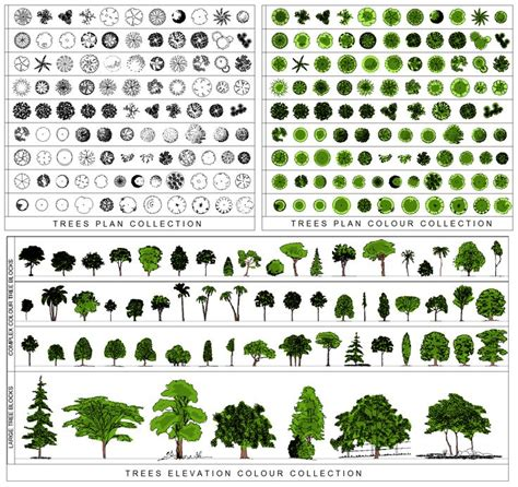 Design Cad Vorlagen Architectural Trees Png Tr02 Tree Collection Bundle Png Entourage Trees Frees