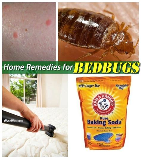 beautiful home remedy for bed bugs on home remedies for