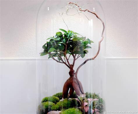 Fabriquer Un Terrarium by Comment Faire Un Terrarium Humide En 8 233 D 233 Tente Jardin