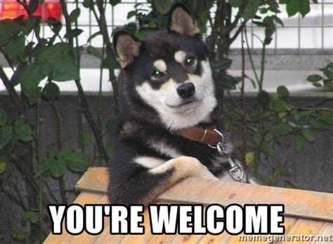 Your Welcome Meme - you re welcome cool dog meme generator