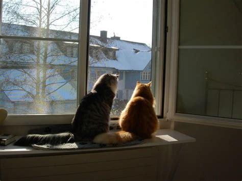Fensterbrett Sitzen by Fensterbankauflage Do It Yourself Katzenforum