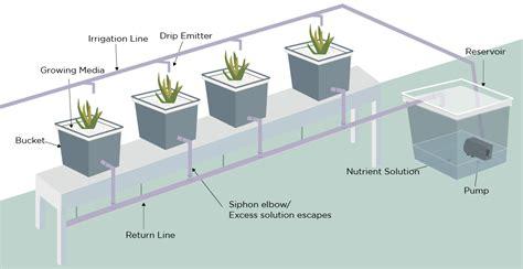 dutch bucket bato bucket hydroponic system green  vibrant