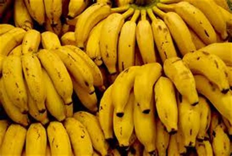 tiny banana name apple small bananas products uganda apple small bananas