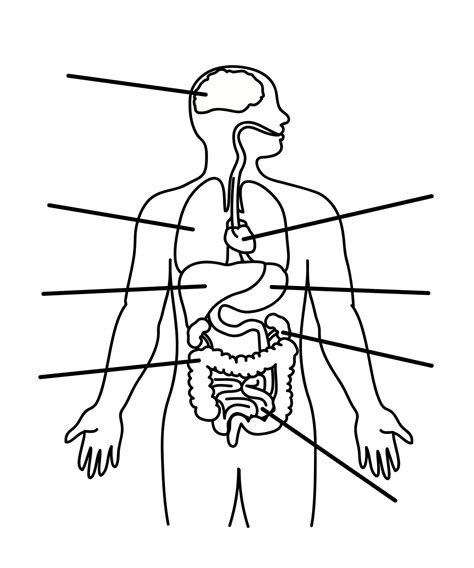 human anatomy coloring book free coloring pages of blank outline