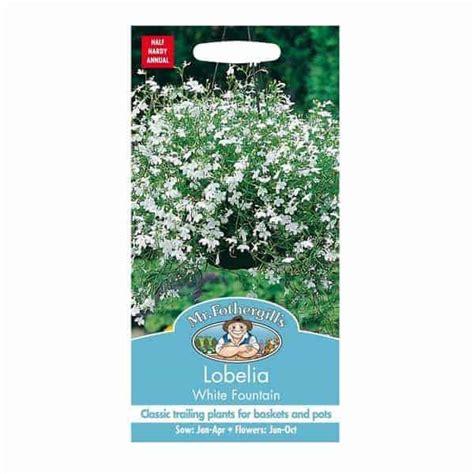 Benih Biji Bunga Plant White jual benih lobelia white 1500 biji mr