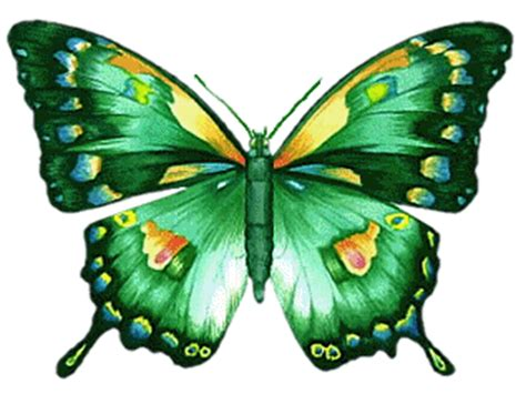 imagenes jpg gif bmp animated butterfly image collection at best animations
