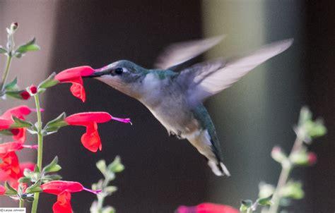 butterfly hummingbird haven knoll landscape design