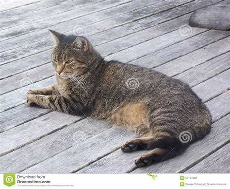 comfort cat comfort stock photo image 50157009