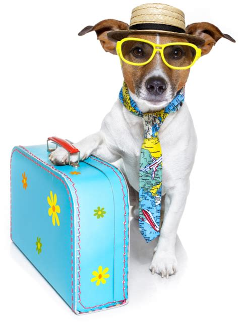 traveling with puppy the pet suitcase 12 items to pack for your