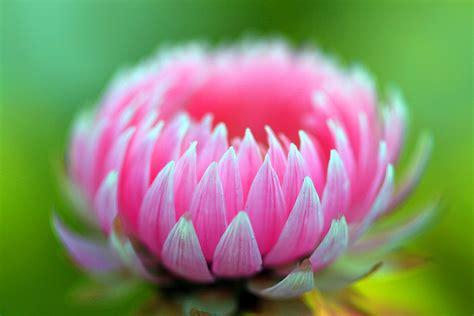 imagenes de flores mas bonitas las mas bellas flores del mundo fotos ecolog 237 a taringa