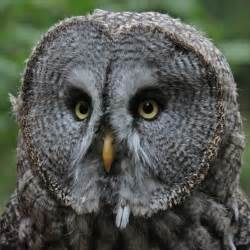 Barn Owl Pellets Facts Awesome Facts About Owls Purushotham Gautam S Blog