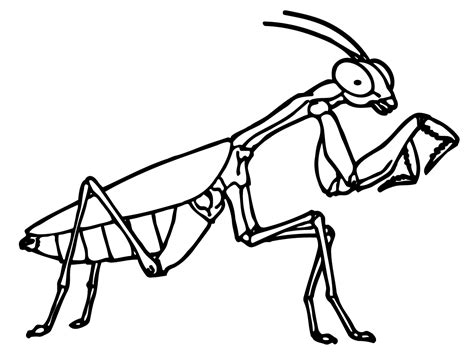 bug coloring pages printable bug coloring pages coloring me