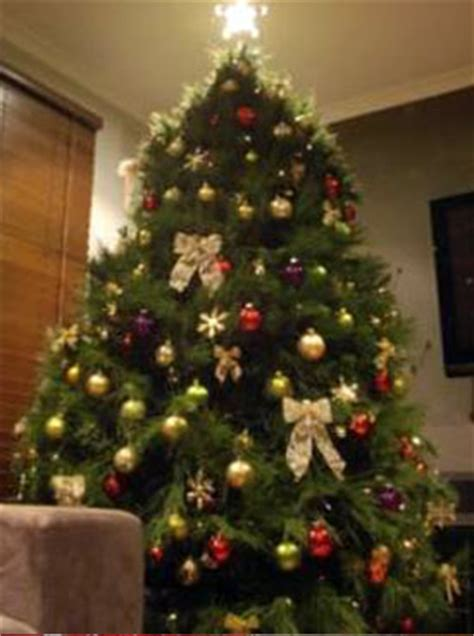 picture of real christmas trees decorated advent calendar day 14 tree shapes tree farm