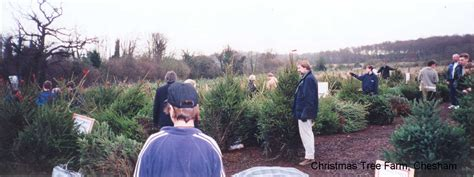 christmas tree farm chesham london fresh xmas trees