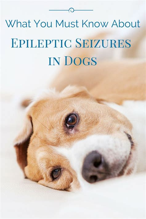seizure in dogs best 25 epilepsy ideas on im service waffle image and