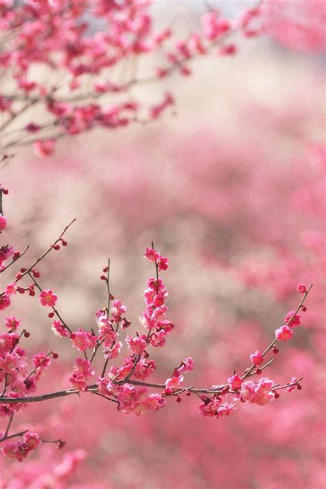 wallpaper pink iphone 4 freeios7 spring in pink parallax hd iphone ipad wallpaper