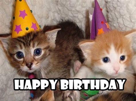 Funny Cat Birthday Meme - happy birthday cats funny www imgkid com the image kid