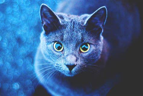 imagenes de jardines con gatos 191 d 243 nde viven los gatos