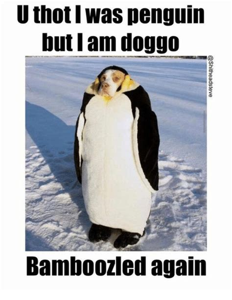 Funny Penguin Memes - 24 memes that prove penguins are the funniest animals on