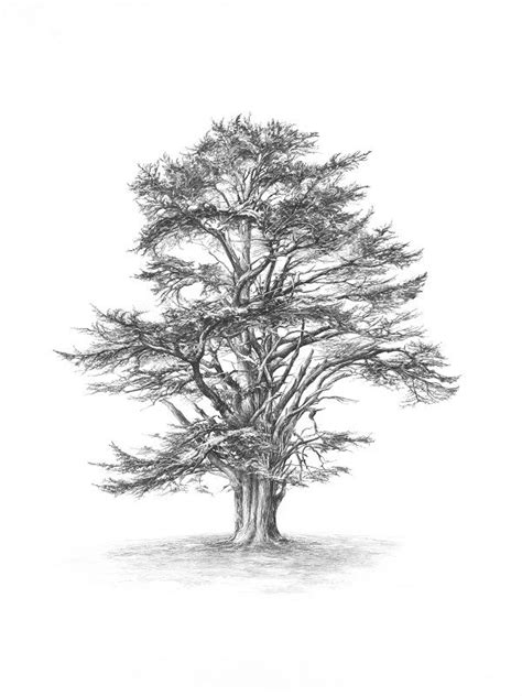 cedar tree tattoo lebanese cedar tree symbolises strength stability