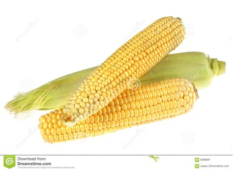 corn ear stock image image of ripe background full
