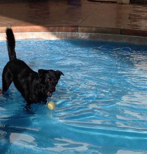 boarding el paso photos southwest animal care complex el paso pet boarding el paso kennels el