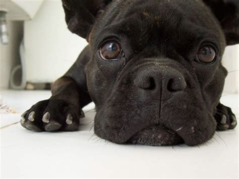 dog wallpapers esther siddiqi download for free free dog screensavers and wallpaper wallpapersafari