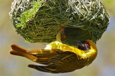 the many different types of bird nests