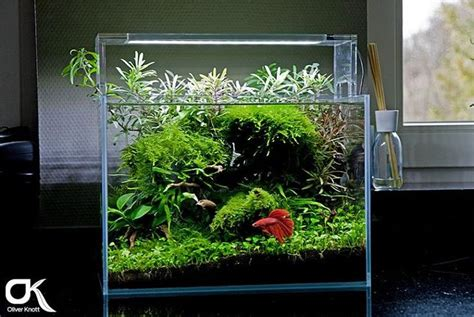 betta aquascape 167 best planted nano aquariums images on pinterest