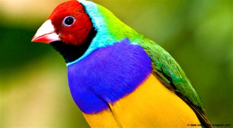 most beautiful birds of the world this wallpapers