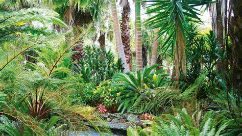 top plants  add tropical texture   nz garden