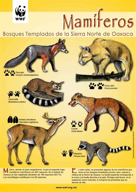 imagenes animales mamiferos imagenes de animales mamiferos chistosos imagui