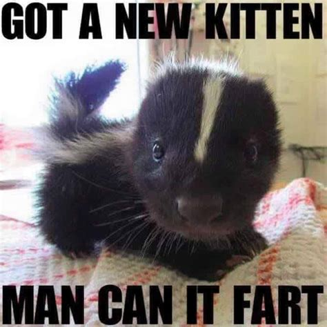 Skunk Meme - new kitten funny pictures quotes memes jokes