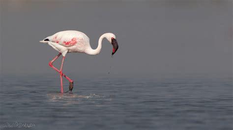 Cat In Bathroom Lesser Flamingo Vs Greater Flamingo