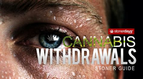 Cannabis Detox Symptoms by Cannabis Withdrawal Stoner Guide Stonerdays