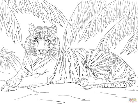 coloring page tigers tiger printable coloring pages coloring home