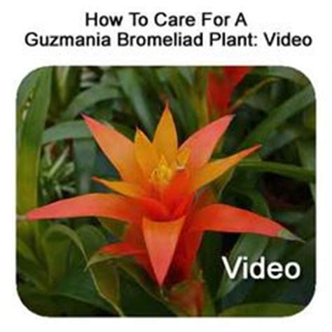 how to care for tropical house plants 1000 images about bromeliads on tropical