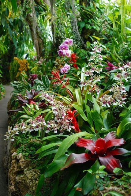 Tropical Garden Flowers 1000 Ideas About Tropical Gardens On Gardening Tropical Plants And Landscaping