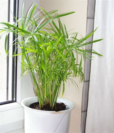 indoor plants indirect sunlight plants that grow without sunlight 17 best plants to grow