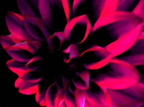 wallpaper dark pink dark pink wallpapers wallpapersafari