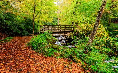 the colors of the mountain 2018 smoky mountains fall foliage and forecast
