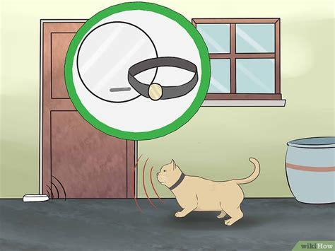Come Tenere Un Gatto In Casa by Come Tenere Un Gatto In Casa 15 Passaggi Illustrato