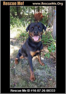 r e a l rottweiler rescue ohio ohio rottweiler rescue adoptions rescueme org