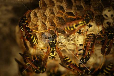 honeycomb  wild bees stock photo nature ka stockphoto