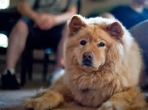 small breeds that do not shed breeds picture