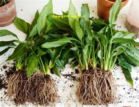 lade per piante lade per la crescita delle piante meetyourmood pollice