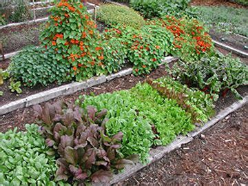 what to plant in summer vegetable garden 1490 best images about gardening on vegetable